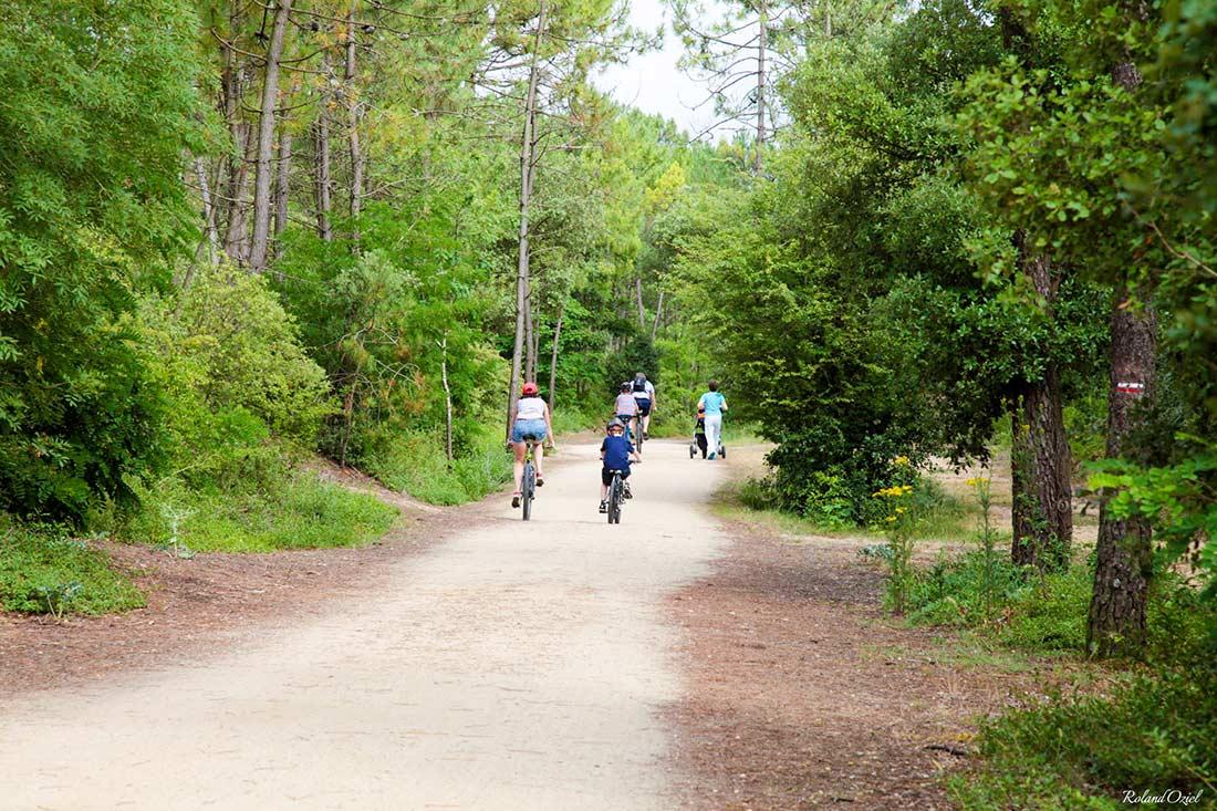 pistes cyclables en forêt de Vendée