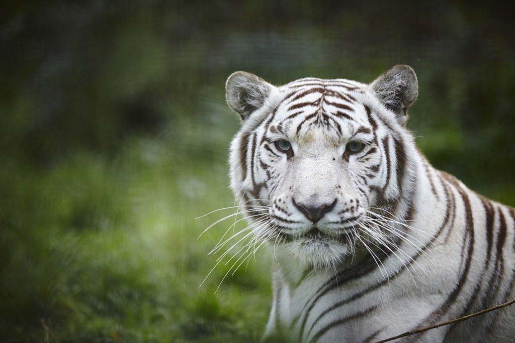 Nature Zoo des Sables d'Olonne